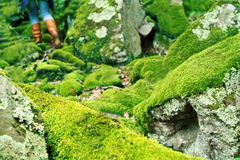 Mossy large rocks in the forest Royalty Free Stock Photos