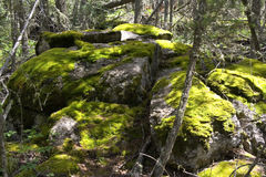 Mossy large rocks in a magic forest Royalty Free Stock Image
