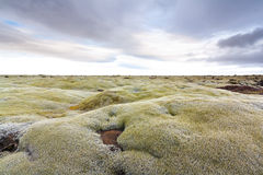 Mossy lava field Stock Images