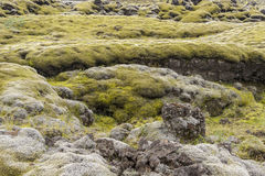 Mossy lava field - Iceland. Stock Images