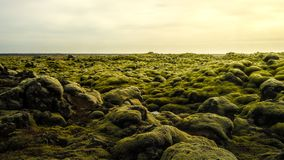 Mossy lava field in iceland. Mossy lava field is located near Vik in south Iceland Stock Photos