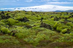 Mossy lava field in iceland. Mossy lava field is located near Vik in south Iceland Royalty Free Stock Images
