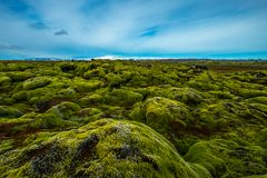 Mossy lava field in iceland. Mossy lava field is located near Vik in south Iceland Royalty Free Stock Photo