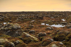 Mossy lava rock Stock Image