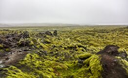 Mossy lava rocks Iceland Royalty Free Stock Photos