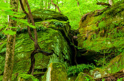 Mossy ledges Stock Photos