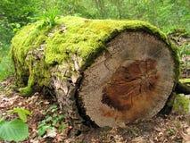 Mossy log stock photos