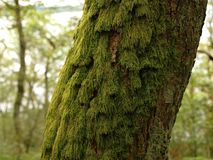 Mossy log Stock Images