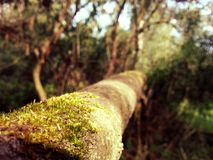 Mossy log Royalty Free Stock Images