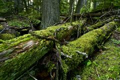 Mossy Logs Royalty Free Stock Image