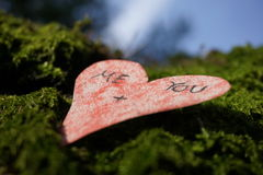 Mossy love Royalty Free Stock Photos