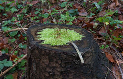Mossy Royalty Free Stock Photography