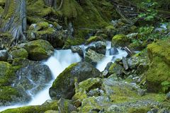 Mossy Mountain River Royalty Free Stock Photography