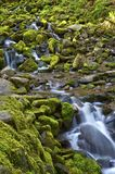Mossy Mountain Stream Royalty Free Stock Image