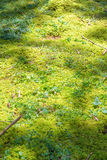 Mossy natural forest floor background Stock Photo