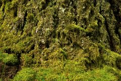 Mossy Nature Background Royalty Free Stock Photography