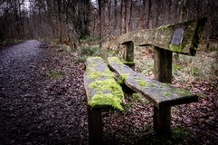 Mossy old woodland bench. An old mossy bench sits unused in a quiet woodland Royalty Free Stock Images
