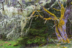 Mossy old tree Stock Image