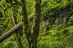 Mossy Oregon Forest Royalty Free Stock Photos