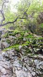 Mossy Outcrop Stock Photography