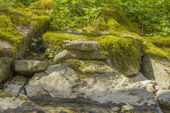 Free Mossy Overgrown Rock Formation Royalty Free Stock Photo - 91512175