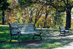 Mossy park benches and trees, empty and alone. Wood slat park benches in park, with trees. Autumn colors of gold red and green Royalty Free Stock Photography