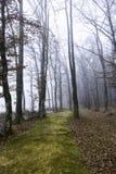 Mossy path through foggy forest Stock Photos