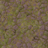 Mossy  pavement Stock Photography