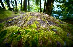 Mossy Picnic Table Royalty Free Stock Photography