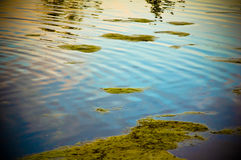 Mossy Pond Surface. Moss floating on the surface of a lake or pond Stock Photo