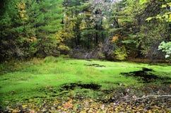 Mossy pond Royalty Free Stock Photo