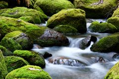 Mossy River Rocks. Moss-covered rocks in a river bed with softly flowing veiled water royalty free stock images