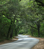 Mossy Road Royalty Free Stock Image