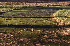 Mossy road covered by leaves. In autumn illluminated by the sun Royalty Free Stock Images