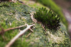 Mossy Rock Royalty Free Stock Photography