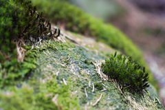 Mossy Rock Royalty Free Stock Photo