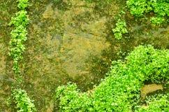 mossy rock Arkivfoton