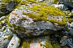 mossy rock Royaltyfria Foton