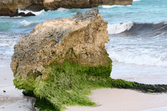 Mossy rock. On the coast of Barbados Stock Photo
