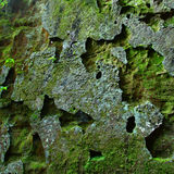 Mossy rock background Royalty Free Stock Photos
