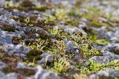 Mossy Rock Royalty Free Stock Photos