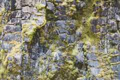 Mossy Rock Royalty Free Stock Image