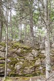 Moss growing in cracks in rocky hillside in Acadia National Park Royalty Free Stock Images