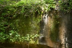 Mossy rock face with vines. A sheer Rock face with mossy growth and vines overhanging in the forest Royalty Free Stock Images