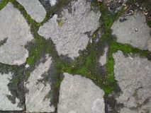 Mossy Rock path pathway zen. Rustic stone path with lush green moss growing in the cracks. Creates a zen or relaxed feeling stock photo