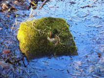 Mossy Rock In Puddle, Etal, Northumberland. UK. Artistic atmospheric, mossy rock in puddle at Etal, Northumberland. UK.nGreat texture and a lovey colours.nBright Stock Image