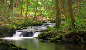 Mossy Rock stream. Stream flowing in the forest over mossy rocks Stock Photo