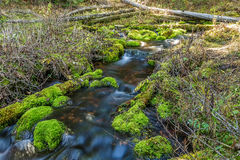 Mossy Rock Stream Stock Photos