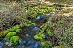 Mossy Rock Stream Stock Photos