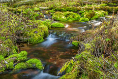 Mossy Rock Stream. Stream with moss covered rocks in Hyalite Canyon near Bozeman, Montana Stock Images